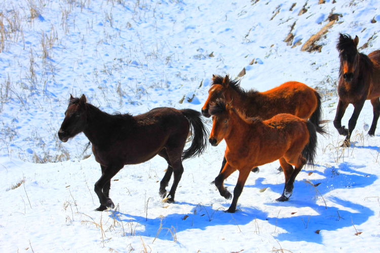 HorsesRunning-750