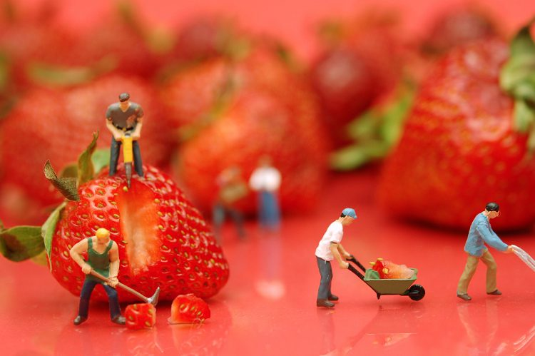 WorkingBerries-750